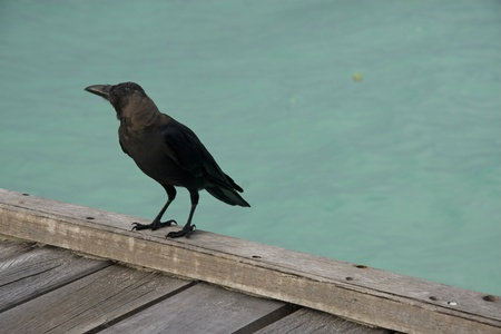 A black crow on the woodern stand on the beach. photo