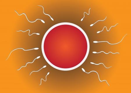 penetracion: Ilustración vectorial de esperma y el óvulo Vectores