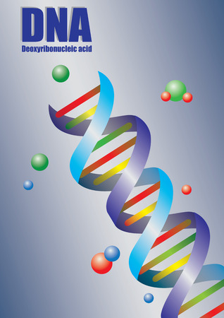 helical: illustration of Deoxyribonucleic acid also known as DNA strand in colors.