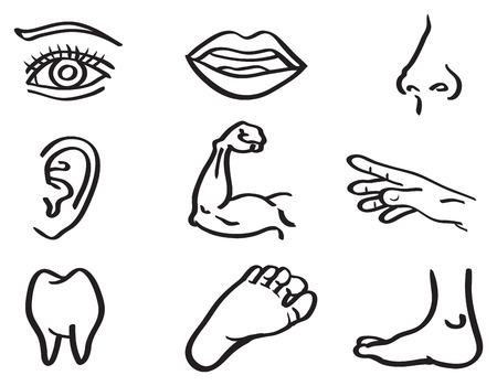 Ilustración vectorial de las partes del cuerpo humano, ojo, la boca, la nariz, la oreja, el brazo, la mano y el pie de dientes aislados sobre fondo blanco Vectores