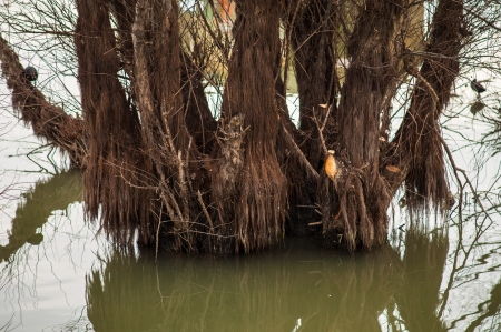 river trunk: Tree trunk partially submerged in river during rising waters in spring