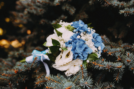 bouquet on a branch of blue spruce 版權商用圖片