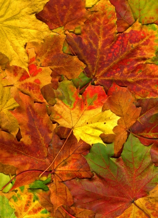 Colorful autumn leaves texture background photo
