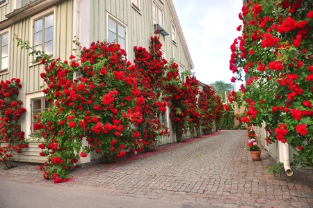 Alley of roses in a medieval town Stock Photo