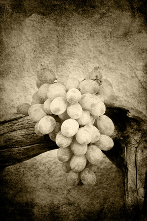 Grapes on driftwood in sepia grunge Stock Photo - 12420971