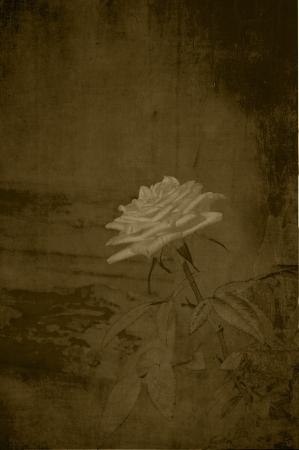 Vintage subtle rose in sepia. Stock Photo - 14272673
