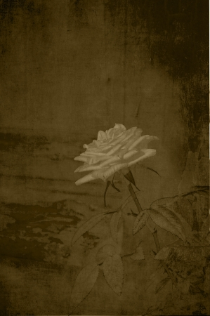 Vintage subtle rose in sepia. photo