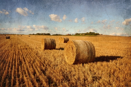 A field with bales of hay in a grunge.