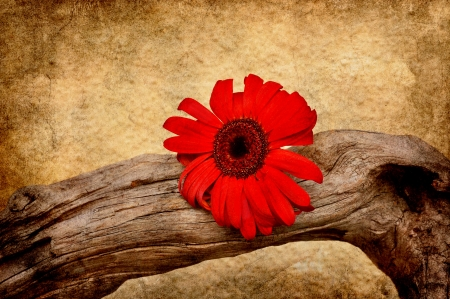 Crooked driftwood with red flower in grunge. photo