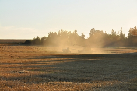 Harvest time in evening light. photo