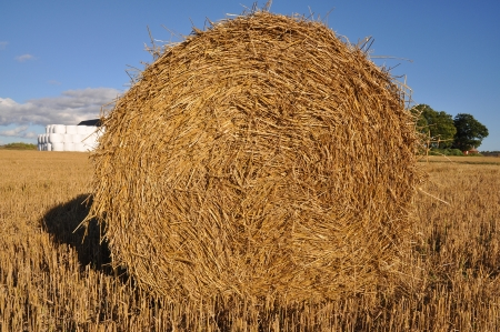 A bale of hay with bales of ensilage wrapped in white plastic in the background. photo