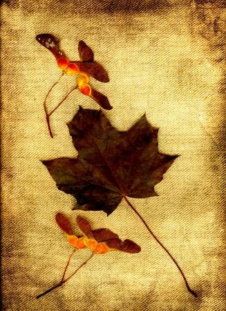 environmen: Dark maple leaf with fruits in grunge.