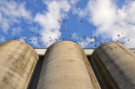 Three old silos with doves in flight. Stock Photo