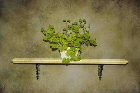 The herb lemon balm in a pot on a shabby chic shelf, vintage style. Stock Photo - 15695691