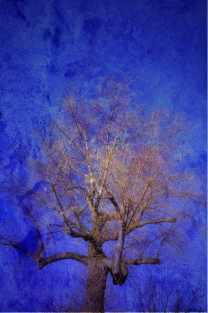 grooved: Abstract tree in blue.