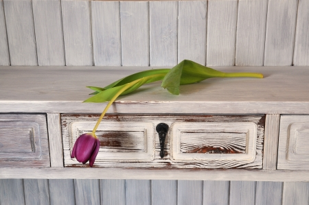 Single purple tulip on a shelf in shabby chic. Stock Photo