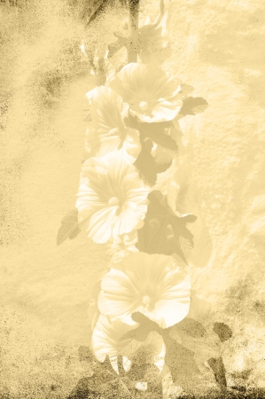 Hollyhock in textured grungy sepia photo