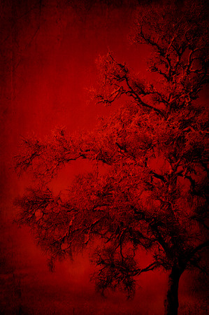 Red background texture with tree pattern. photo