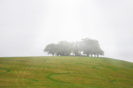foggy hill: Trees on green hill a foggy autumn morning. Stock Photo