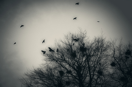 Textured grainy image of crows flying and a tree with nests.
