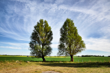 summer nature: Two green trees against fields.