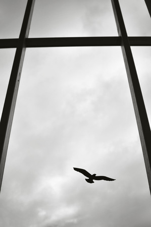 Silhouette of a single bird on a window of a modern building. Stock Photo