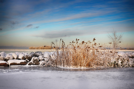 Reed and rocks by a lake in winter.