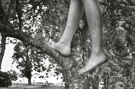 Child climbing tree in black and white. Stock Photo