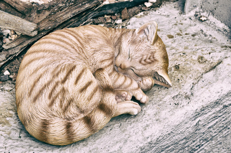 Light closeup of cat sleeping in retro colors.