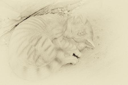 Light closeup of cat sleeping in sepia. Stock Photo