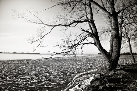 Winter tree by a lake in wintertime in black and white Stock Photo