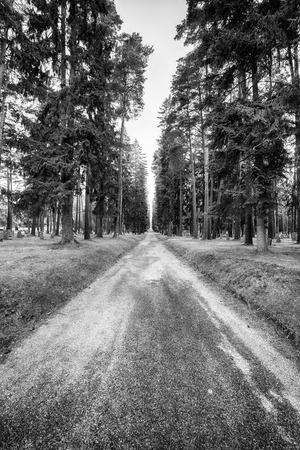 Symbolic image of the way forward through the woods with headstones among the trees.