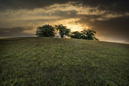 Trees on a hill a early morning at sunrise. Stock Photo