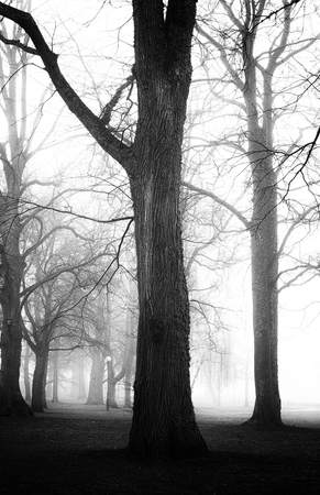 Grungy, textured image of trees in black and white, spooky feeling.