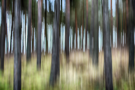 Abstract image of tree trunks in motion blur.
