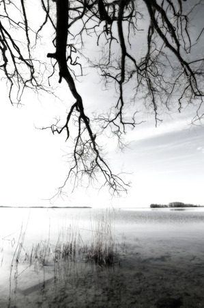 Artistic soft image with a monochrome tone to emphasize a early morning by the lake.