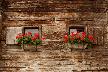 framehouse with geranium photo