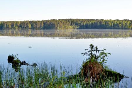 shorelines: Forest Lake