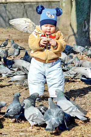 feeds: Little boy feeds the urban pigeons. Stock Photo