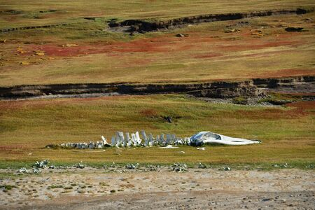 whale skeleton in the national park