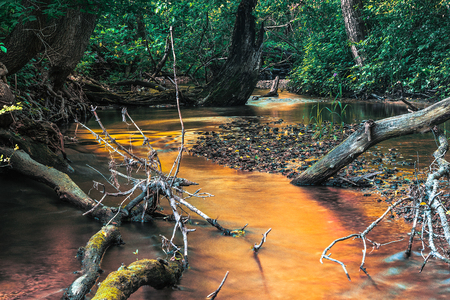 Secluded Creek in Forest with Blurred Flowing Water