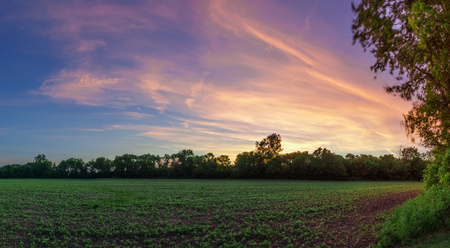 Panoramic HDR Sunset Over Agricultural Farm Field Banco de Imagens