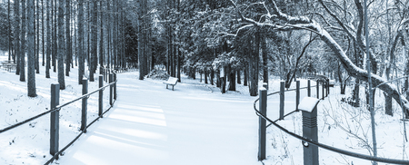Black and white panoramic photograph of a park with trees and a bench all covered in fresh fallen snow. Banco de Imagens