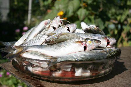 Mucho peces frescos, mújol Foto de archivo - 3549370