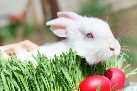 bunnie: Very Cute Easter Bunny Peeking Through the Grass