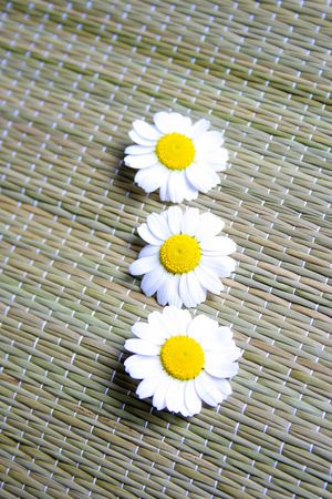 Camomile flowers Stock Photo - 6767388