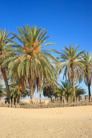 Desert oasis with palm tree photo