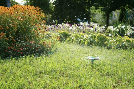 A sprinkler head sprinkles, and the green grass grows all around photo
