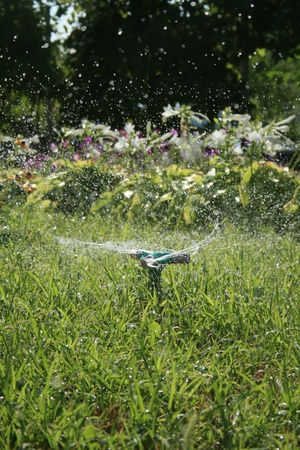 A sprinkler head sprinkles, and the green grass grows all around