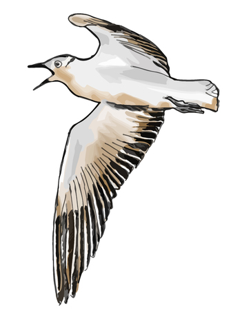 A hand drawn vector illustration sketch of a seagull flying Illustration